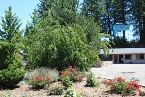 Mother Lode Motel, Motel  Placerville - big - 53