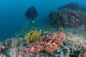 Hotel Istra-Neptun (30 of 51)