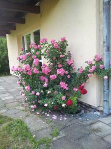 Accommodation in Neusalza-Spremberg