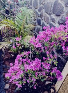 Ivy Orchids Villa - Lonavala, Vily  Lonavala - big - 6