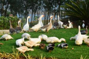 Fazlani Natures Nest wellness Centre & Spa, Rezorty  Lonavala - big - 90