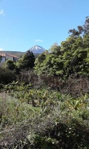 Cerca dos Frades, São Roque do Pico