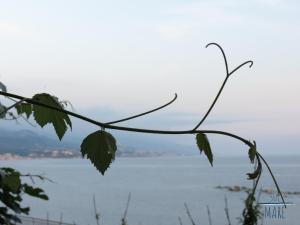 obrázek - Sul Mare B&B