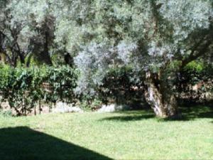 Ionian Breeze Studios, Apartments  Lefkada Town - big - 73