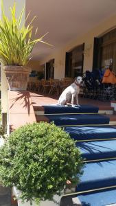 Hotel Splendid, Hotely  Diano Marina - big - 3