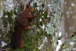le-nid-des-ecureuils