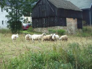 Mühlenhof - [#118235]