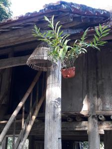 Auberges de jeunesse - Muong Bi Homestay