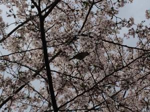 Suzume-An, Kúriák  Kiotó - big - 38