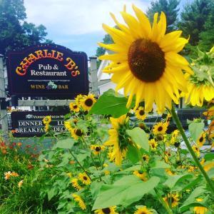 Stoweflake Mountain Resort&Spa - Accommodation - Stowe