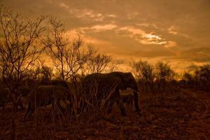 . Kruger Park Bungalow
