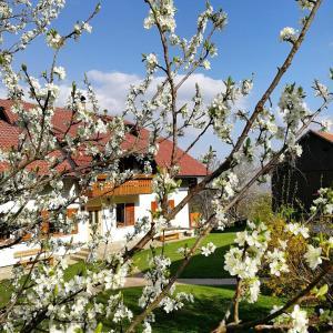 Turistična kmetija Lesjak