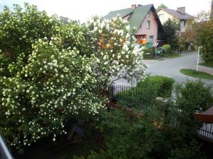 Mieszkanie na zielonej