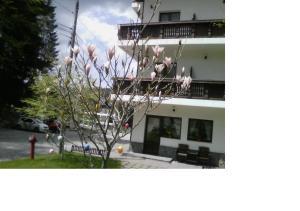 Pensiunea Anotimpuri - Hotel - Predeal