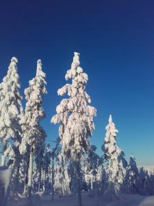 Ollilan Lomamajat, Dovolenkové domy  Kuusamo - big - 189