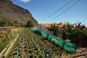 Casa Celia, Valle Gran Rey - La Gomera - La Gomera