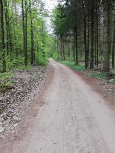 Zacisze przy lesie