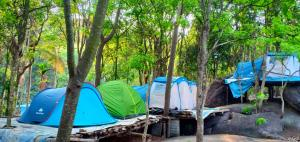 Green Adventure Tent stay Wayanad
