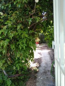 Aegina Finikas Rooms Aegina Greece