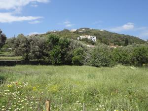 House in the grass land. Andros Greece