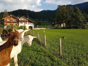 Agritur Piasina - Hotel - Alpe di Pampeago