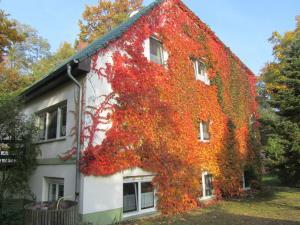 Ferienwohnung Wentowsee - Altglobsow