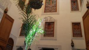 obrázek - Dar Bahija - Arab-andalusian charming house in Fez