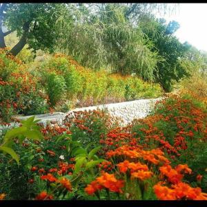 Gahiret Castle, Rezorty  Chitral - big - 28