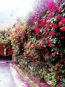 Gahiret Castle, Rezorty  Chitral - big - 163