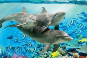 Delfina nähe Europa park Rust
