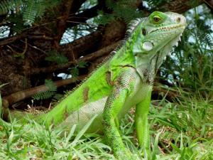 Grenadian by Rex Resorts (27 of 38)