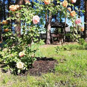 Агроусадьба Сосновый двор в Прилуках под Брестом