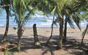 Coconut Hostel BANDB, Tortuguero