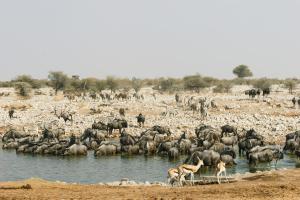 Etosha Village (26 of 49)