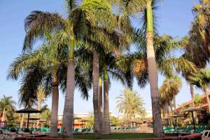 Oasis Village, Hotel  Corralejo - big - 15