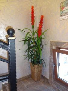 Apartment Dona, Apartments  Chernomorets - big - 82