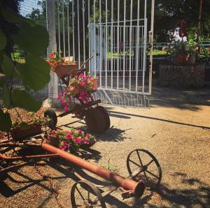 La Casa in Campagna, Agriturismi  San Martino in Pensilis - big - 13