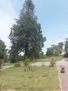 Le Manoir Sequoia