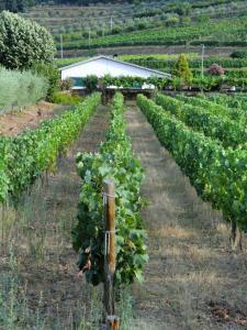 Quinta das Aveleiras, Farm stays  Torre de Moncorvo - big - 51