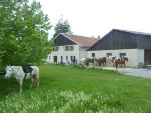 Accommodation in Longcochon
