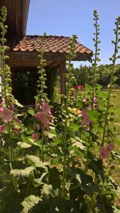 Jabłkowo gospodarstwo agroturystyczne na skraju Puszczy Boreckiej