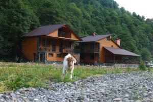 Accommodation in Chargali