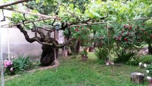 Гостевой дом Tsinandlis Edemi, Цинандали