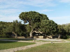 Il Vecchio Ginepro, Bed and breakfasts  Arzachena - big - 57