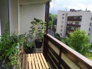 Apartament Kwiatkowo