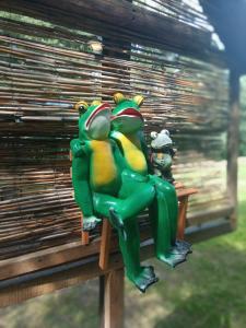 Bike Camping Frog