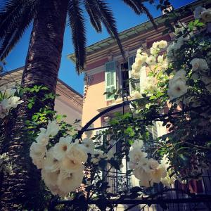 Location gîte, chambres d'hotes Hotel Villa Rose dans le département Alpes maritimes 6