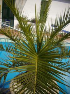 Hotel Splendid, Hotely  Diano Marina - big - 67