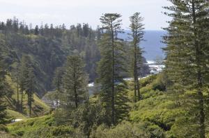 Ball Bay House - Norfolk Island Holiday Homes, Dovolenkové domy  Burnt Pine - big - 17
