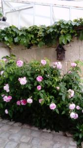 Location gîte, chambres d'hotes Chambres d'Hôtes Bleynie-Ruine de Rome dans le département Charente maritime 17
